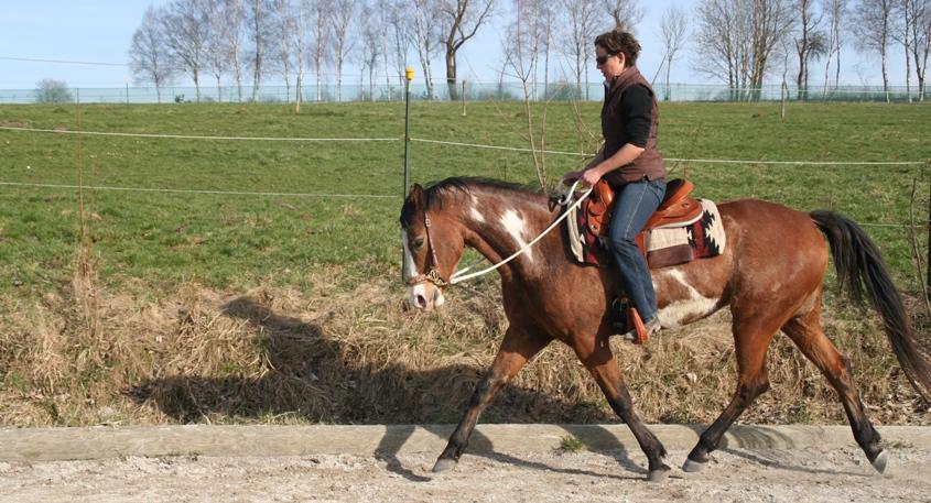 Richtig reiten lernt man erst mit dem eigenen Pferd