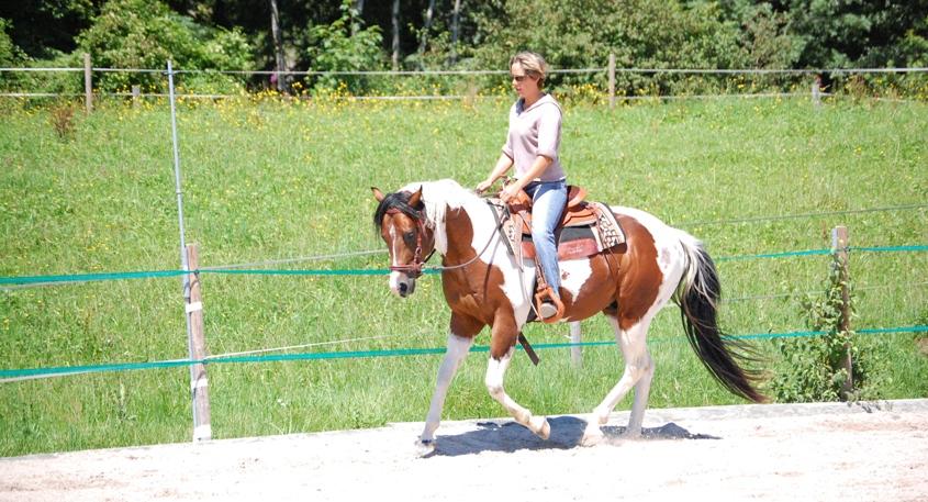 Das Ziel beim Reiten ist die psychische und physische Gesunderhaltung des Pferdes